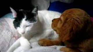 Puppy and Kitty Love- turn down the  volume!