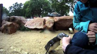 Meeting the Penguins at London Zoo - GoProHD