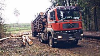 Transport drewna & praca w lesie :)