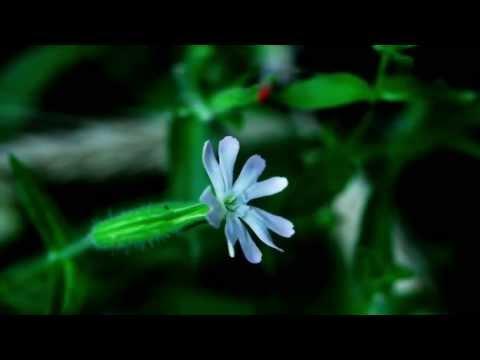 V.A.S. Sound Design - Flowers Ballet