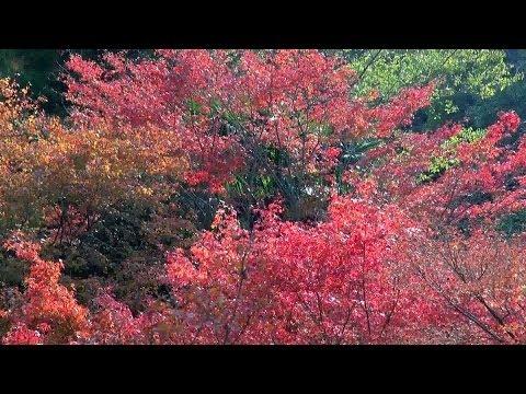 京都・嵐山 紅葉 法輪寺 Hōrin-ji Temple in autumn, Kyoto(2013-11)