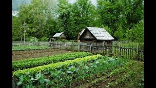Мой огород - что на нем растет