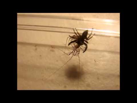 Image house centipede