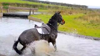 Horse Fails & Falls (BEST FAILS! MUST WATCH!!)