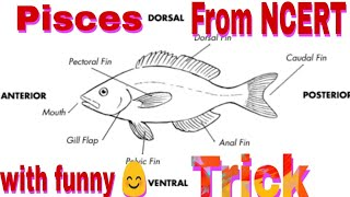 Chondrichthyes and osteichthyes tricks for neet! Animal kingdom tricks! tricks for Pisces|tricks