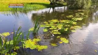 Рыба погибла на реке Осливка в Белыничском районе [БЕЛАРУСЬ 4| Могилев]