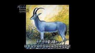 [서프라이즈] 신비로운 파란 사슴, 날지 못하는 파란 새가 사라진 슬픈 이유