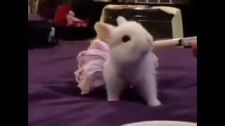 bapbalaca şirin dovşan