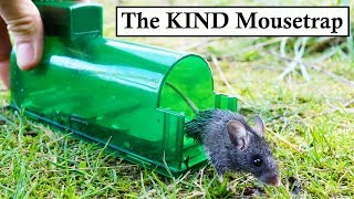 The KIND Mouse Trap (With Buzzer Attachment). Mousetrap Monday
