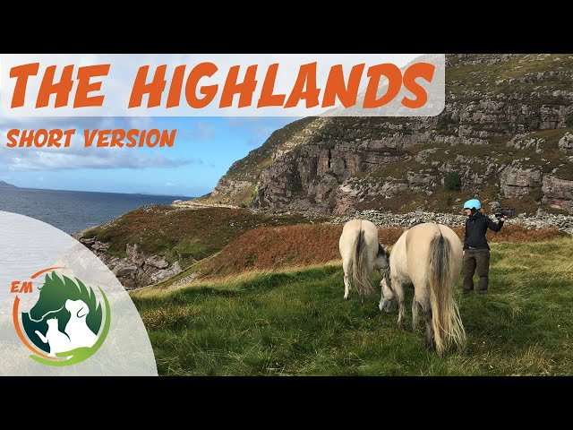 Backing 2 untrained horses in SCOTTISH wilderness