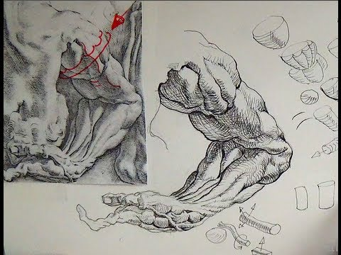 Pen & Ink Drawing Tutorials | How to draw an arm like Peter Paul Rubens