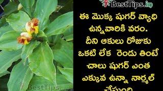 Reduce your sugar levels just by eating this plant leaves|ఈ మొక్క ఆకుతో షుగర్ ఎంత ఉన్నా తగ్గుతుంది