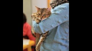 """Мы на выставке """"Удивительные кошки"""" в Сургуте. 6.10. 2013 год. Сургутское ТВ."""