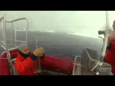 Tagging minke whales in the Antarctic