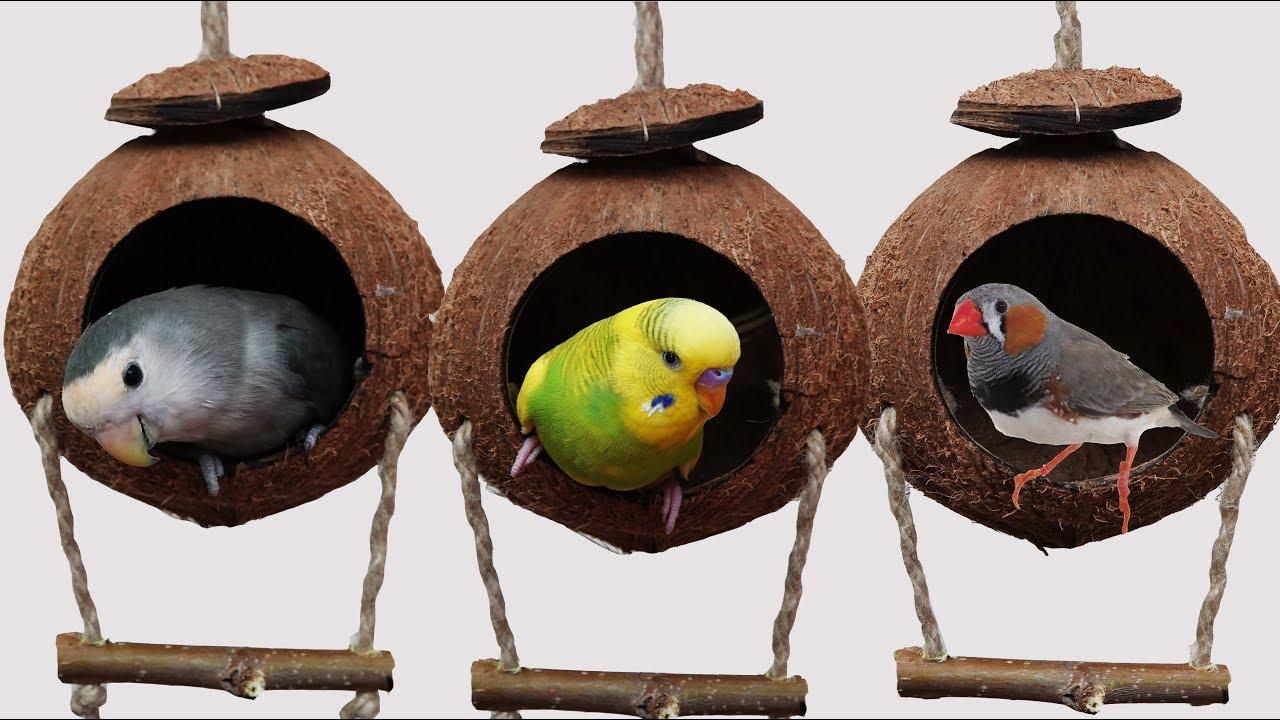 Hindistan Cevizi Kus Evi Yapimi Muhabbet Kusu Papagan Youtube