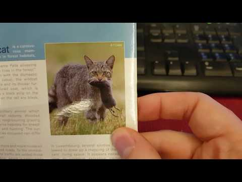 5 euro luxembourg 2015 le chat sauvage