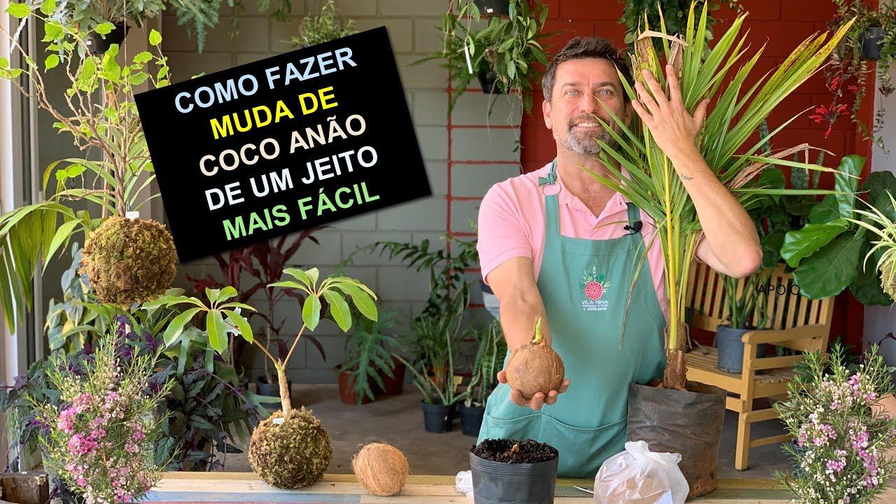 Como Fazer Muda Coco Anão de Um Jeito Fácil
