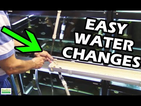 """How To Do Water Changes in your Aquarium Fish Room. """"Gary Don't Carry"""""""