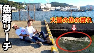 タコ釣りに行ったら数千匹の魚の群れがいた!!