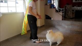Lion Dance, Dog Dance, 狮狗决战 , The Lion Man,pomeranian Lion Dance