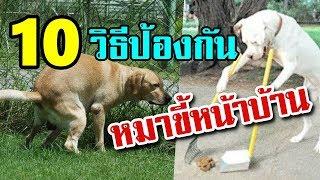 10-วิธีป้องกัน-หมาขี้หน้าบ้าน-ได้ผลดีเกินคาดเชียวล่ะ