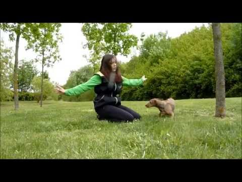 Sára- The Dachshund and her amazing dog- trick video TRAILER