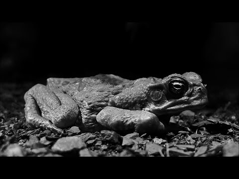 Invasion Of The Deadly Cane Toads - Australia With Simon Reeve - BBC
