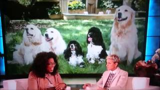 Oprah about her dogs sleeping in her bed and Ellen DeGeneres about her cats in bed