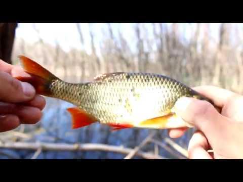 Ловля краснопёрки в болоте. Рыбалка на поплавок. Май 2019 L Видеоотчёт. Чапаевск