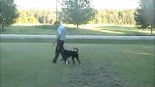 London Ontario Dog Training - Jarvis