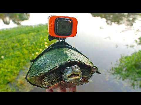 I Strapped a GoPro on Tank the Turtle!