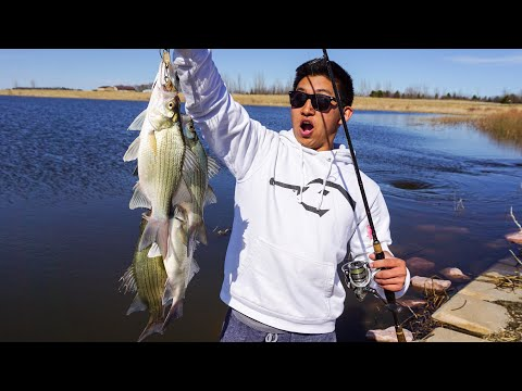 White Bass Catch Clean And Cook! (Are They Good?)