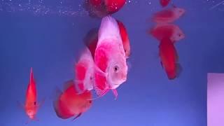 важен ли свет в аквариуме?