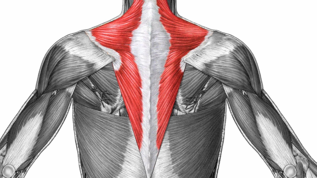 Trapezius Muscle How To Heal A Pulled Trapezius Muscle Youtube