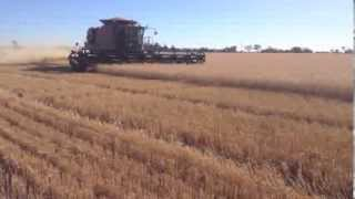 Farming at Rochester VIC