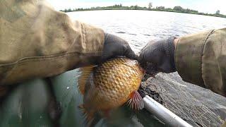 Выпутываю карасей из сети. Всю рыбу отпустил.
