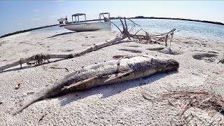 2021 The WORST Red Tide TAMPA BAY Has Ever Seen