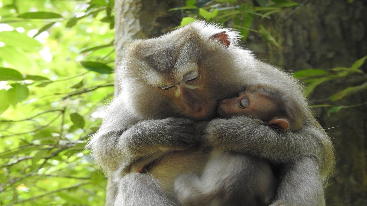 how to take care of a baby monkey