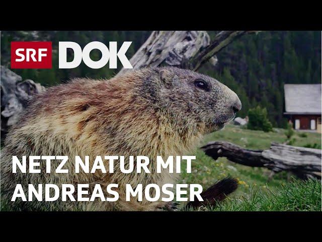 Mit Wildcams Tieren ganz nah | Magische Momente aus NETZ NATUR mit Andreas Moser | Doku | SRF DOK