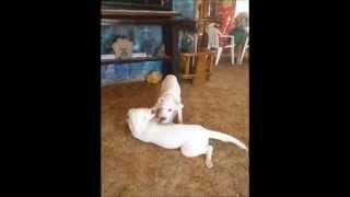 My Favorite Puppy Video so Far, My Precious little Babies !