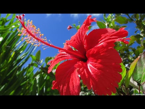 ТОП-10 лучших КРАСИВО ЦВЕТУЩИХ комнатных растений