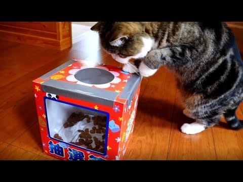 抽選箱とねこ。-Lucky box and Maru&Hana.-