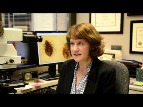 Dr  Bobbi Pritt   Bedbugs