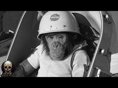 Uzaya Yollanan Maymunun Ürkütücü Hikayesi