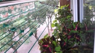 Как ухаживать за комнатными цветами летом?(Жара. дождь, полив. вредные примеси в воздухе, и их влияние на растения., 2015-07-25T12:15:18.000Z)