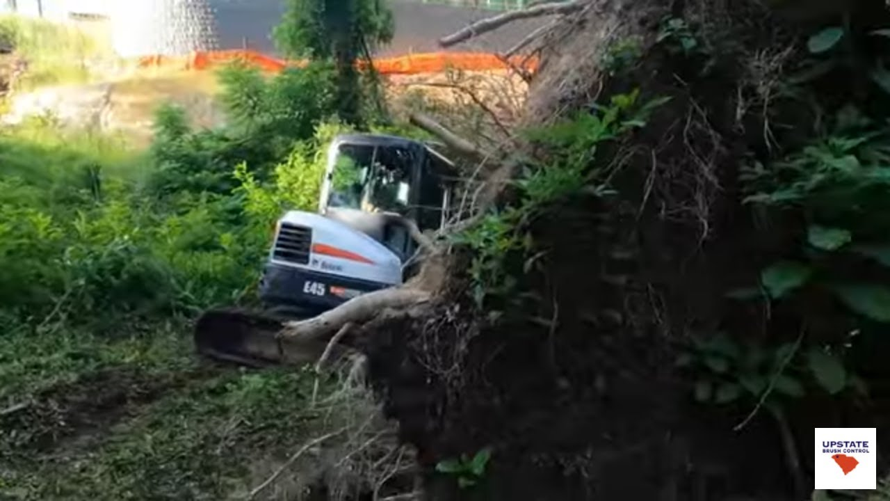 Dealing with a Hung-up Tree