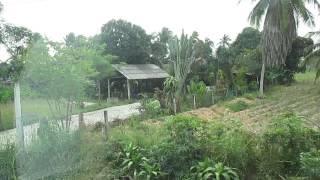 Фруктовый сад.Тайланд
