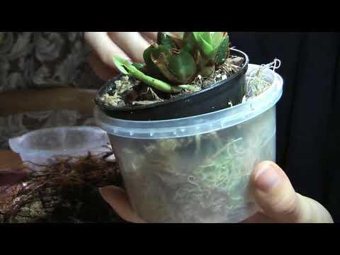 Орхидеи -