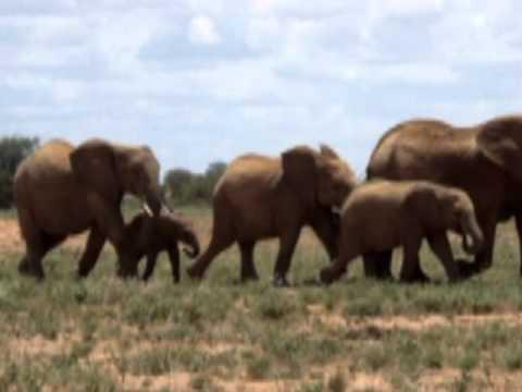 Baby Elephant Walk - Music by Henry Mancini
