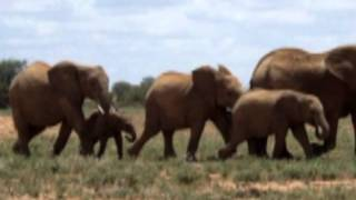 Baby Elephant Walk - Music by Henry Mancini